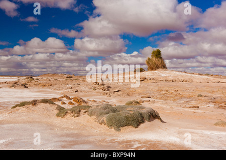 An extinct mound spring near Blanche Cup Mound Spring on the Oodnadatta Track in South Australia's Outback - Stock Photo