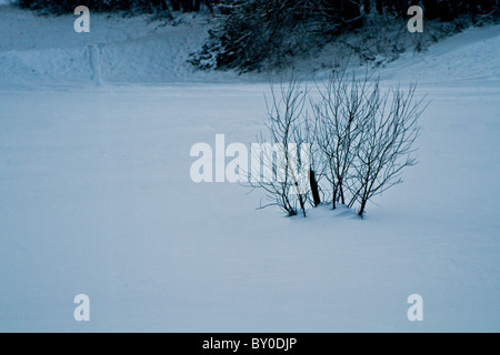Snow covered trees in the forest after a heavy snow storm - Stock Photo