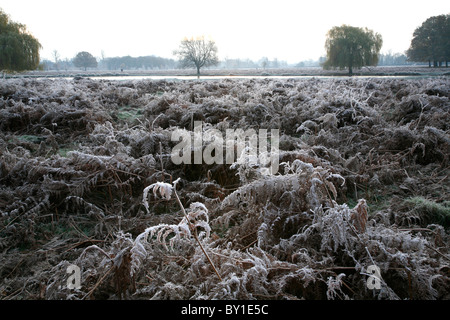 Frost encrusted bracken by the Leg of Mutton Pond on Bushy Park, Teddington, London, UK - Stock Photo