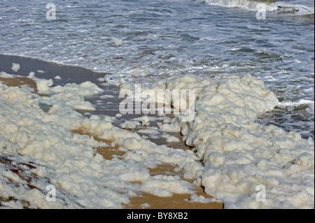 Sea foam / ocean foam / beach foam formed during stormy conditions and following an algal bloom - Stock Photo