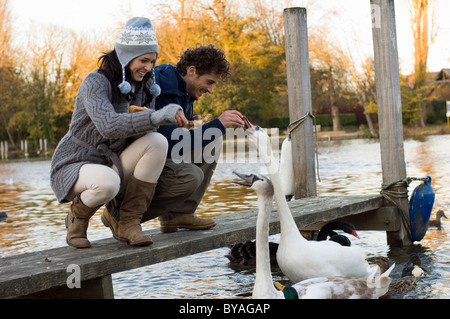 Couple feeding swans - Stock Photo
