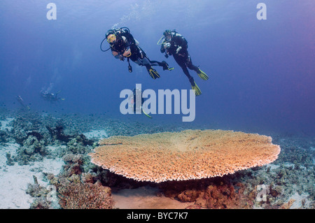 Pair scuba divers look at on Table coral - Stock Photo