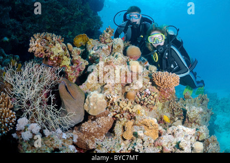 Pair scuba divers look at on Mediterranean moray (Muraena helena) Red sea, Egypt - Stock Photo