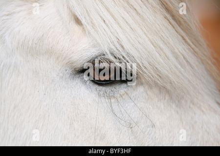 Pferdeauge / horse eye - Stock Photo