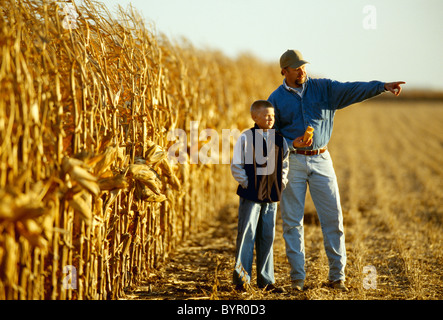 Agriculture - A farmer in his grain corn field with his son while inspecting the crop during harvest season / Central - Stock Photo