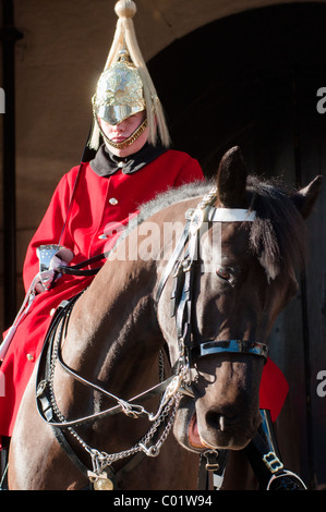 One of the Queen's Lifeguards on horseback at Horse guards parade, London, England. - Stock Photo