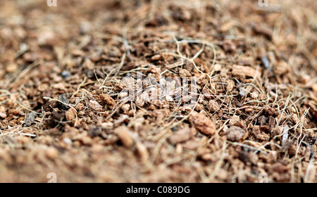 close up of brown mulch good for use as a background - Stock Photo