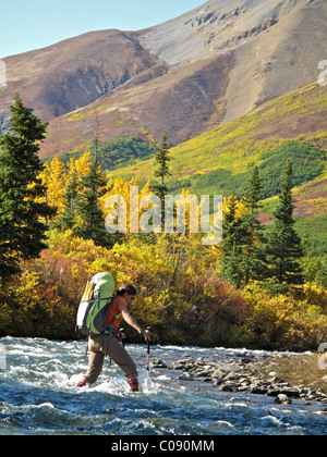 Female hiker with walking sticks crosses Windy Creek along the Sanctuary River Trail in Denali National Park, Interior - Stock Photo