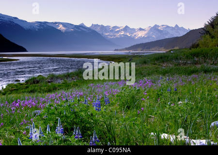 Scenic view of Lutak Inlet and the Chilkoot Range near Haines with wildflowers in the foreground, Southeast Alaska, - Stock Photo