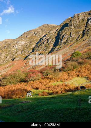 The western slope of Whin Rigg at Wastwater near Nether Wasdale in the Lake District National Park, Cumbria, England, - Stock Photo