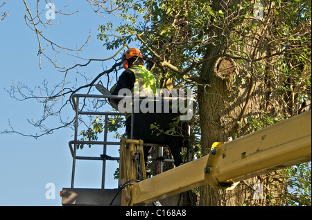 Tree surgeons working on roadside trees in Sussex. - Stock Photo