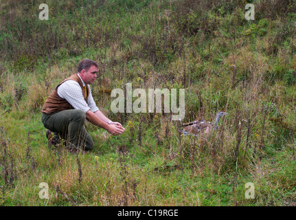 David Waters of the Great Bustard Group releasing a Great Bustard on to Salisbury Plain September 2010 - Stock Photo