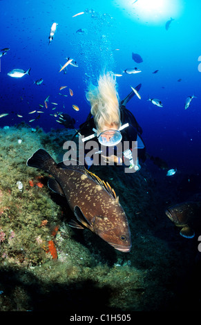France, Corse du Sud, diver and a grouper - Stock Photo