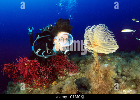 France, Corse du Sud, diver and the big spirographis by 9843ft - Stock Photo