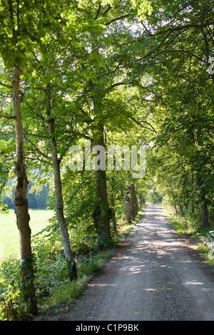 Dirt track through forest - Stock Photo
