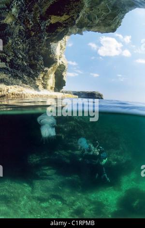 Split level, barrel jellyfish or dustbin-lid jellyfish (Rhizostoma pulmo), Black Sea, Crimea, Ukraine - Stock Photo