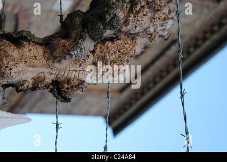 Barbed wire on  wood. there is a building on the back round - Stock Photo