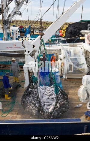Tuna being unloaded from fishing boat, Manta, Ecuador - Stock Photo