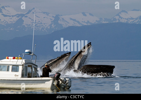 Humpback Whale (Megaptera novaeangliae). Whale watcher taking pictures of whales bubble net feeding. - Stock Photo