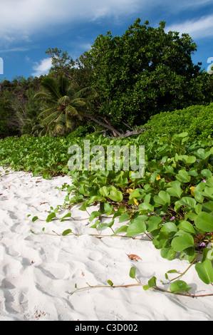 Lush vegetation of Anse Georgette in Praslin, Seychelles. - Stock Photo