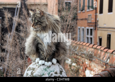 Desinterested cat, Venice, Italy - Stock Photo