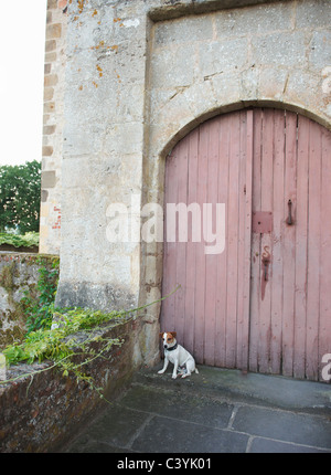 Dog sitting in front of closed doors - Stock Photo