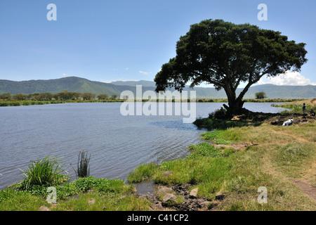 Noitokitok Srings picnic area in Ngorongoro Crater, Tanzania - Stock Photo