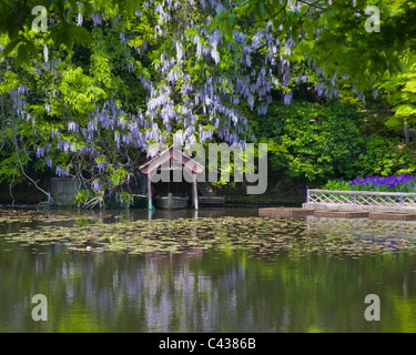 Boathouse and hanging flowers at Kyoyochi Pond at Ryoanji Temple in Kyoto - Stock Photo