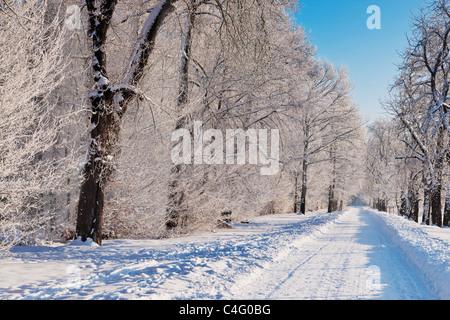 Ein Waldweg im Winter | a forest track in wintertime - Stock Photo