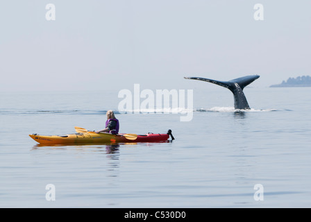 Humpback whale surfaces near a woman sea kayaking in Frederick Sound, Inside Passage, Southeast Alaska, Summer - Stock Photo