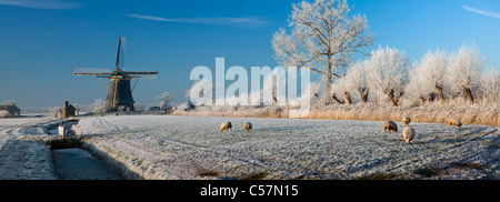 The Netherlands, Nigtevecht, Sheep and windmill in snow. Panoramic view. - Stock Photo