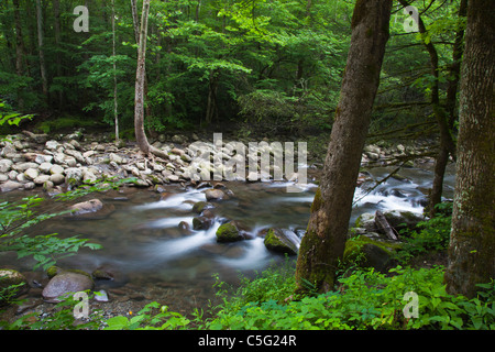 Middle Prong of the Little Pigeon River in the Greenbrier area on the Tennessee side of Great Smoky Mountains National - Stock Photo