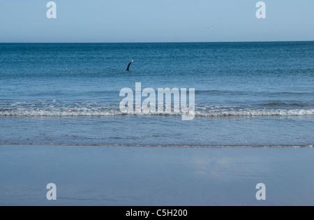 Lone swimmer at Coldingham Bay - Scottish Borders - Stock Photo
