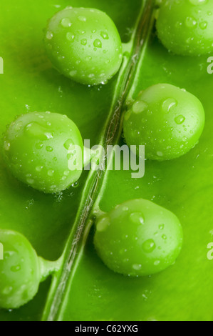 Pea. A photo close up of peas with water drops - Stock Photo