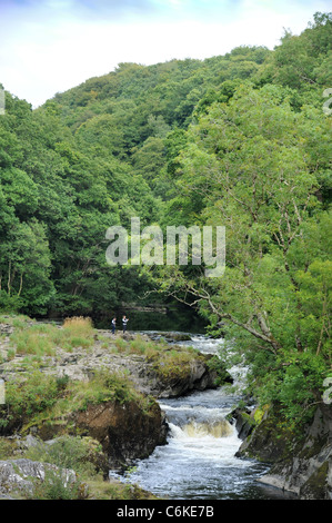 The River Afon Teifi from Cenarth Bridge forming the border between Carmarthenshire and Ceredigion in West Wales - Stock Photo