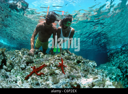 Divers snorkeling on coral table near purple starfish (Ophidiaster ophidianus). Ustica Island, Sicily, Italy, Mediterranean - Stock Photo