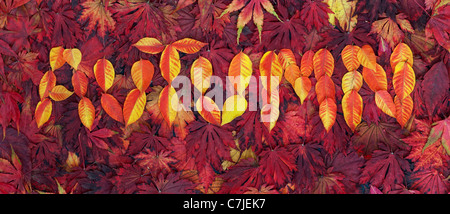 Autumn leaf pattern. The word AUTUMN in leaves - Stock Photo
