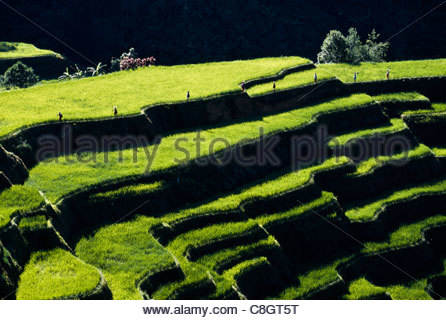Rice farmers walk along the sculptured terraces. - Stock Photo