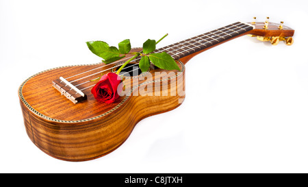A Red Rose on Ukulele isolated white background - Stock Photo