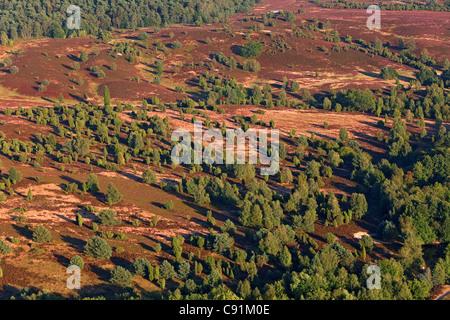 Aerial photo of the Lueneburg heath, nature reserve, Lower Saxony, Germany - Stock Photo
