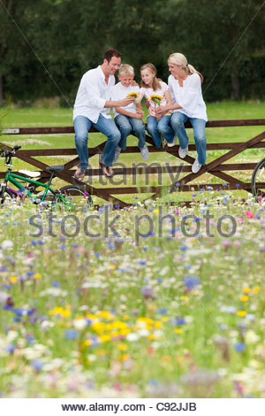 Family with bicycles sitting on fence and looking at sunflowers in wildflower field - Stock Photo