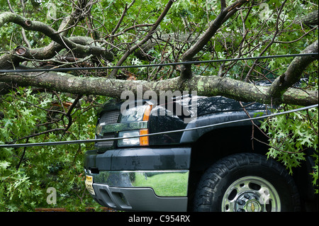 Auto damage caused by fallen tree in storm. - Stock Photo