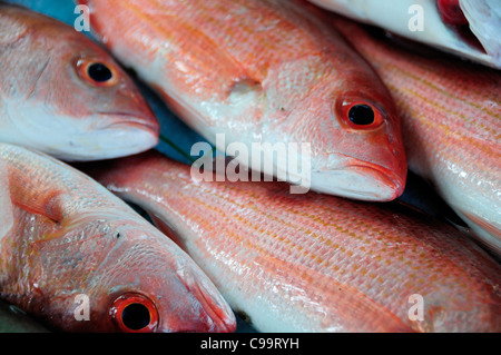 Mexico, Guerrero, Zihuatanejo, Close, cropped view of red snapper fish for sale. - Stock Photo
