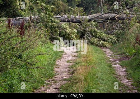A fallen tree blown over by the wind blocking a track - Stock Photo