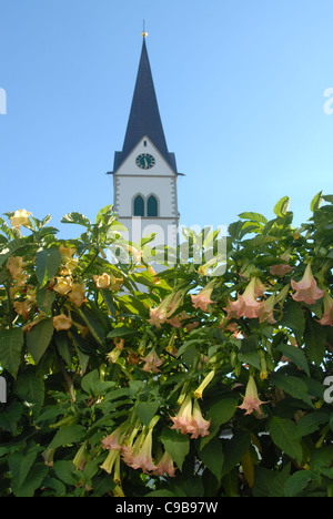 Spire of St. NIkolauskirche, the main church of Markdorf in Upper Swabia, Germany, and trumpet flowers in blossom - Stock Photo
