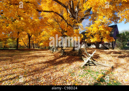 Leaves Covered Road, Wick Farm, Jockey Hollow State Park, Morristown, New Jersey - Stock Photo