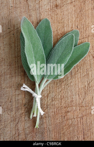 Sage on a wooden background - Stock Photo