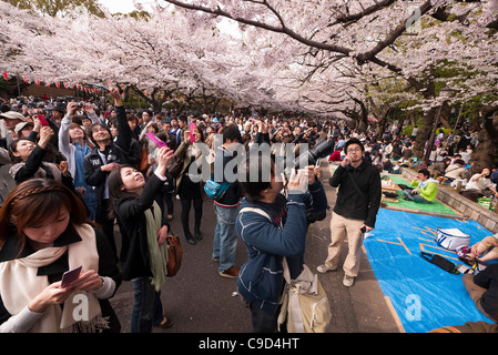 Japan, Tokyo, Ueno Park, Hanami cherry blossom viewing parties under cherry trees in full blossom, group of Chinese - Stock Photo