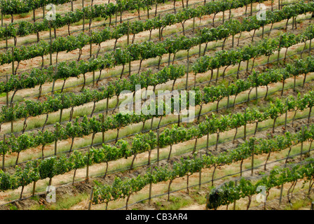 Vineyards makers of Cote Bonneville Wines; Sunnyside; Yakima Valley; Washington State  ,Pacific Northwest USA - Stock Photo