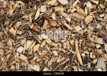 wood chip and pine needle mulch background - Stock Photo